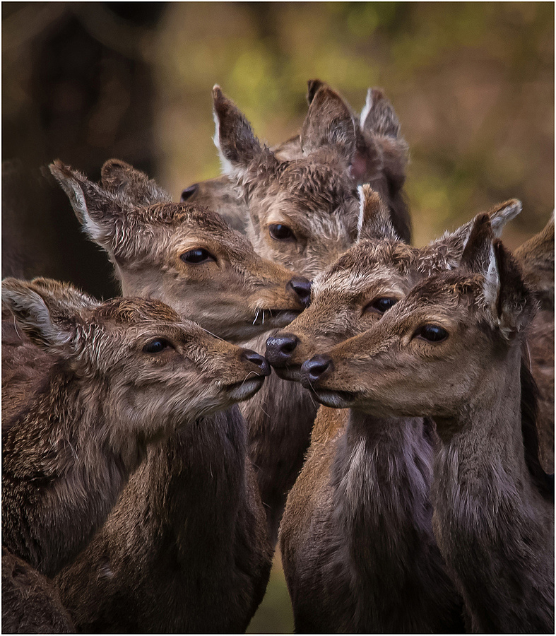 switch | LENS MODEL NOT SET <br> Click image for more details, Click <b>X</b> on top right of image to close
