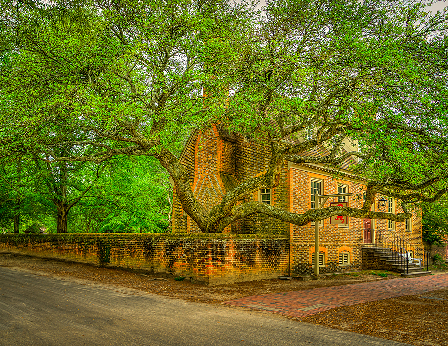 The Oak | ZEISS 24-70MM F4 ZA <br> Click image for more details, Click <b>X</b> on top right of image to close