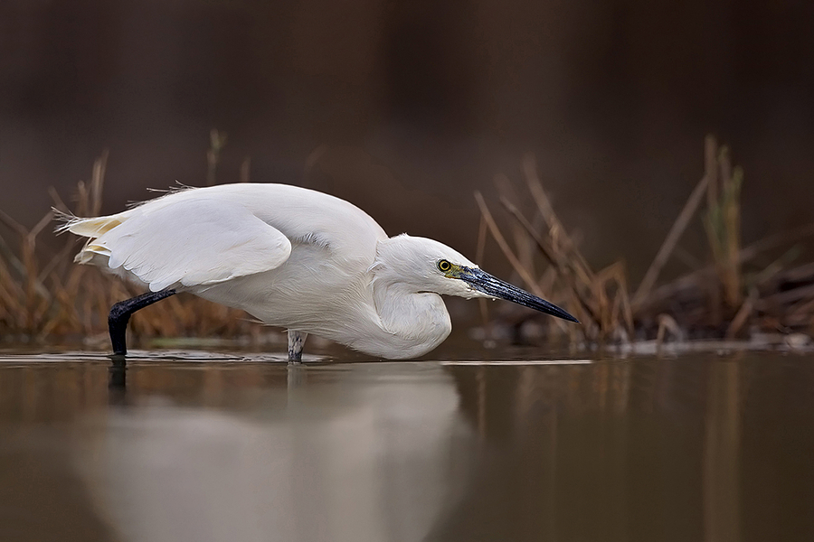 Il bianco | SONY 500MM F/4 G SSM <br> Click image for more details, Click <b>X</b> on top right of image to close