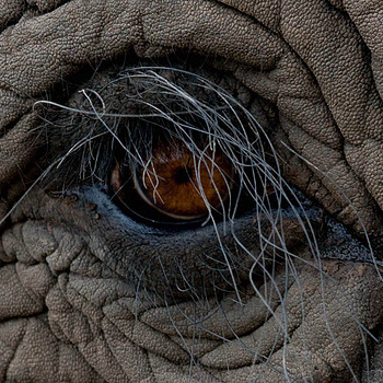 Elephant eye | ZEISS ZA VARIO-SONNAR 24-70MM F2.8