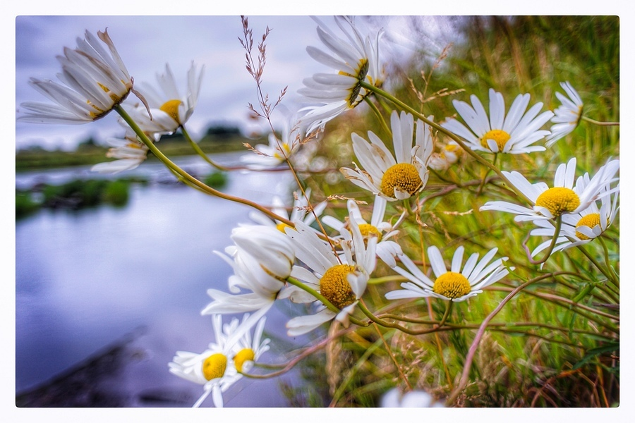 Thurso River Flower | LENS MODEL NOT SET <br> Click image for more details, Click <b>X</b> on top right of image to close