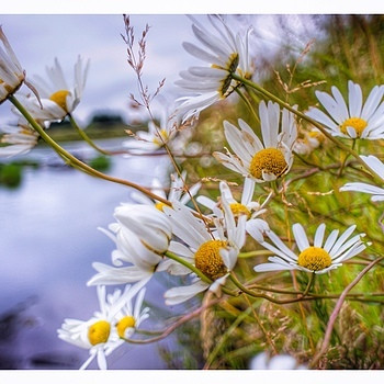 Thurso River Flower | LENS MODEL NOT SET