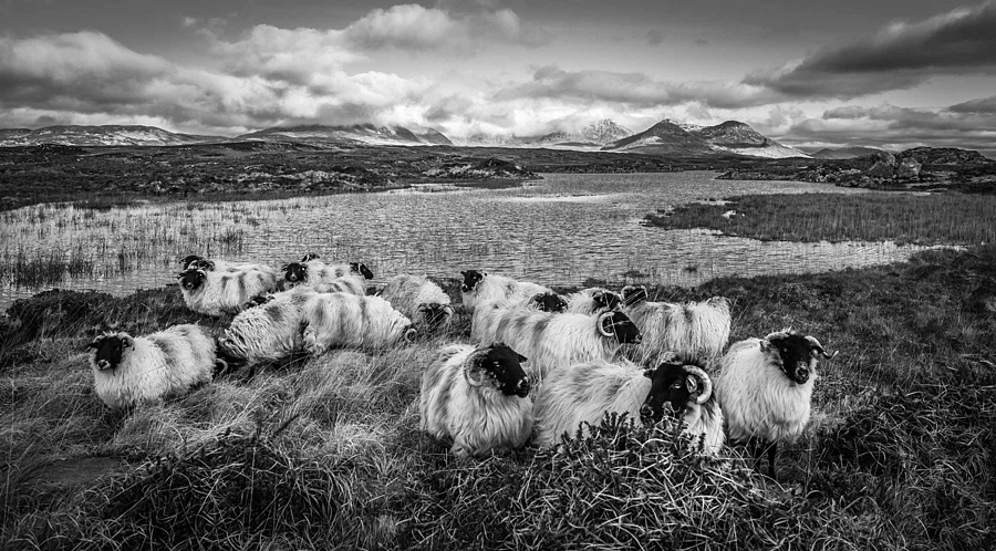 Connemara Sheepscape | LENS MODEL NOT SET <br> Click image for more details, Click <b>X</b> on top right of image to close