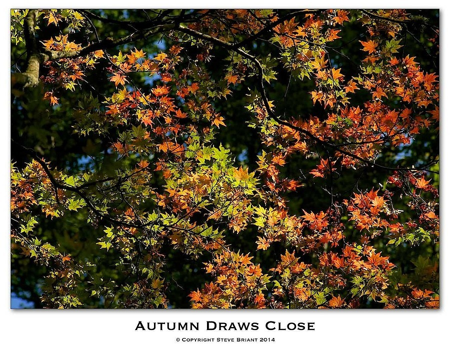 Autumn Draws Close | LENS MODEL NOT SET <br> Click image for more details, Click <b>X</b> on top right of image to close