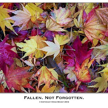 Fallen. Not Forgotten | LENS MODEL NOT SET <br> Click image for more details, Click <b>X</b> on top right of image to close