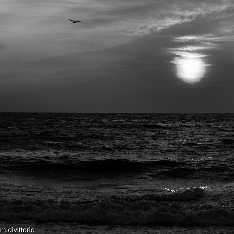 Sunset - BW | SONY DT 50MM F/1.8 SAM <br> Click image for more details, Click <b>X</b> on top right of image to close