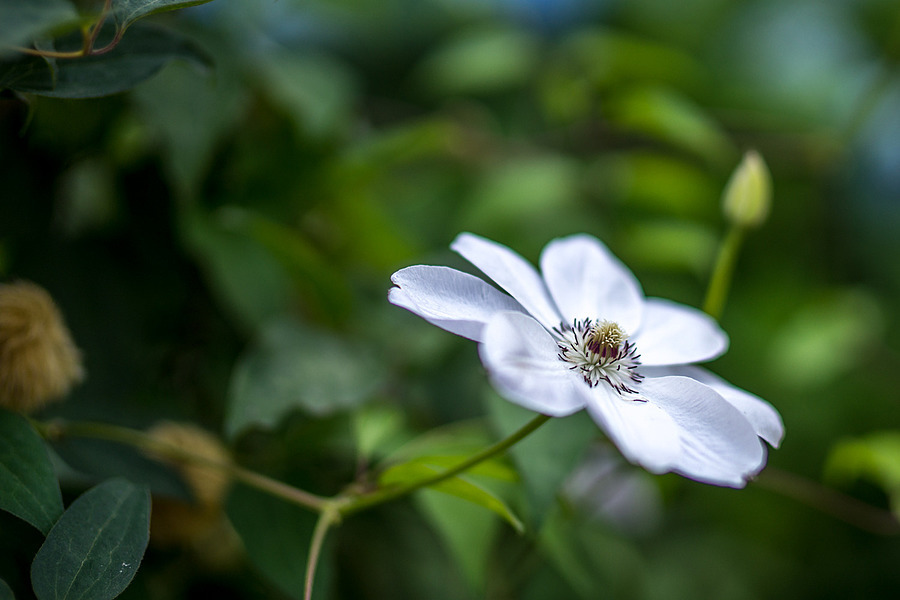 Photo - 34347 | ZEISS ZA PLANAR  50MM F1.4 <br> Click image for more details, Click <b>X</b> on top right of image to close