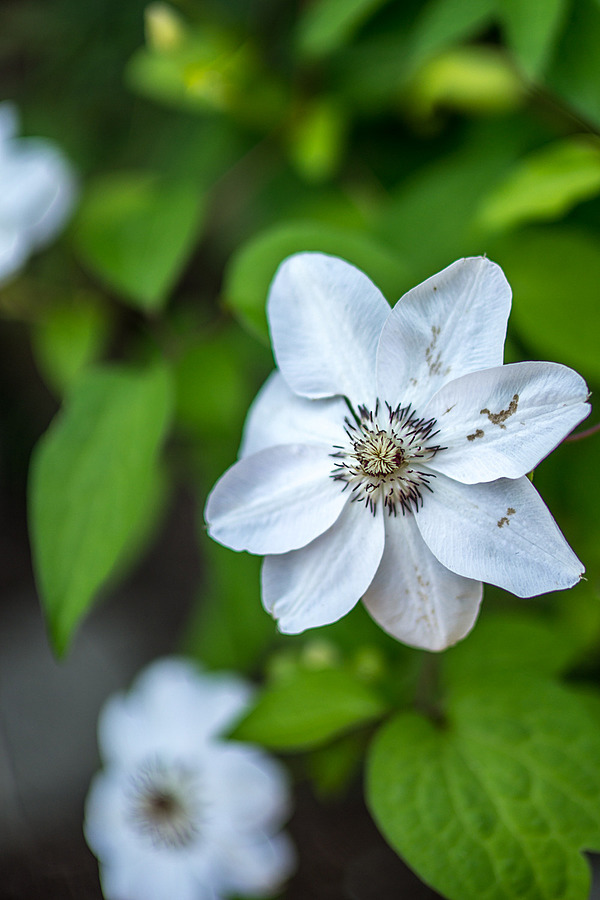 Photo - 34348 | ZEISS ZA PLANAR  50MM F1.4 <br> Click image for more details, Click <b>X</b> on top right of image to close