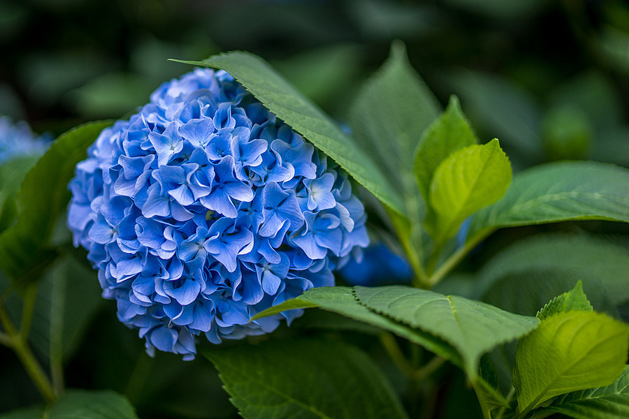 Photo - 34350 | ZEISS ZA PLANAR  50MM F1.4 <br> Click image for more details, Click <b>X</b> on top right of image to close