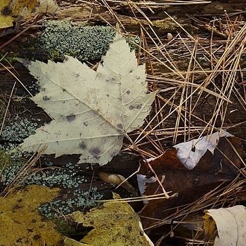 Leaf, Lichen and Slug | LENS MODEL NOT SET <br> Click image for more details, Click <b>X</b> on top right of image to close